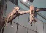 Cheetah and tree